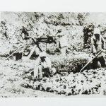 一二九师三八五旅旅长陈锡联在帮助农民浇水灌田。
